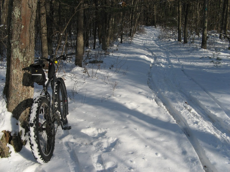 Daily fatbike pic thread-snow-ride-trees-getting-chopped-down-006.jpg