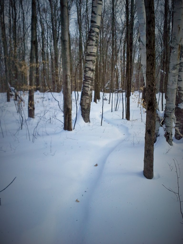 Trails after the storm-snow-trail.jpg