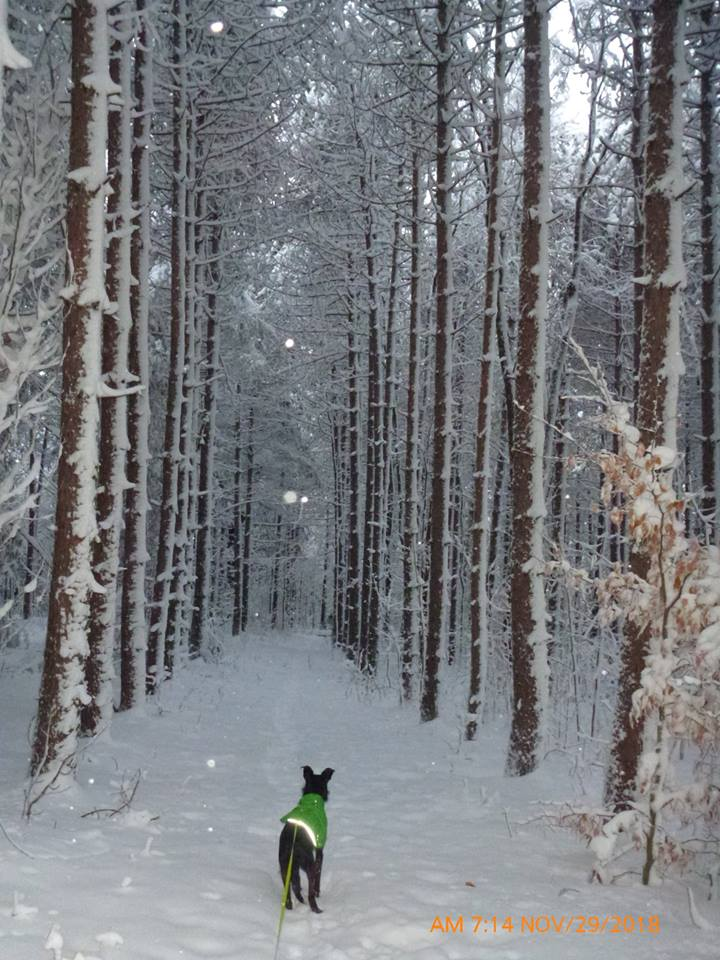 How was your commute today?-snowpines.jpg
