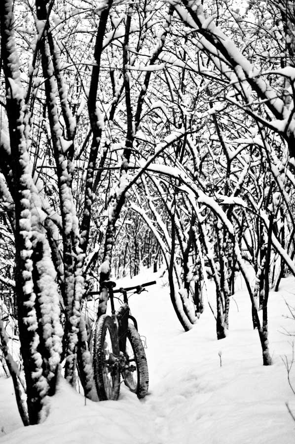 Picture Friday 2/5/10, Fresh Produce edition...-snowy-paradise-snomobike.jpg