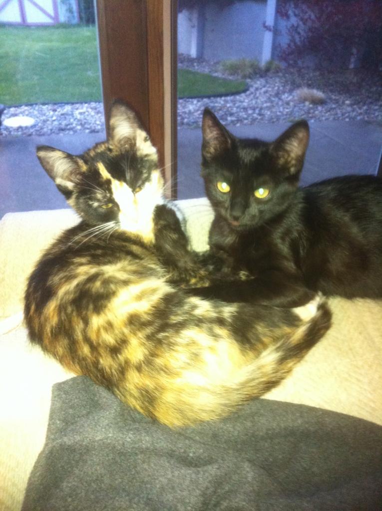 Cat Passion (here kittie, kittie, my new best friend...) Post your cat photos.-sonnyrico.jpg