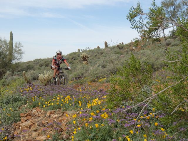 Quasi-AZSF Sonoran Trails Ride on Saturday AM-sonoran-north-azsf-mtb-ride-12.jpg