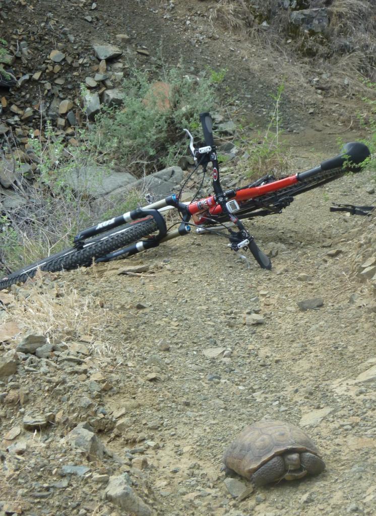 8/24/12: Photo Friday-sonoron-trail-bike-tortoise-2012-08-24-007-crop-.jpg
