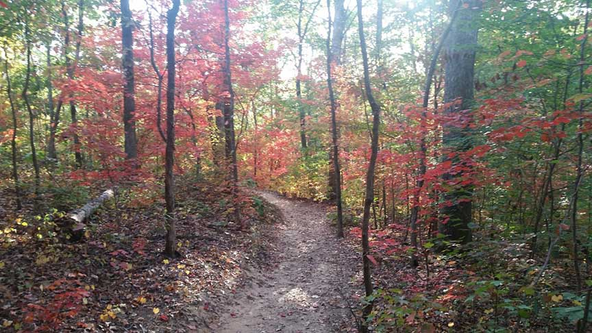 Do you ride singletrack to work?-sope-creek-fall.jpg