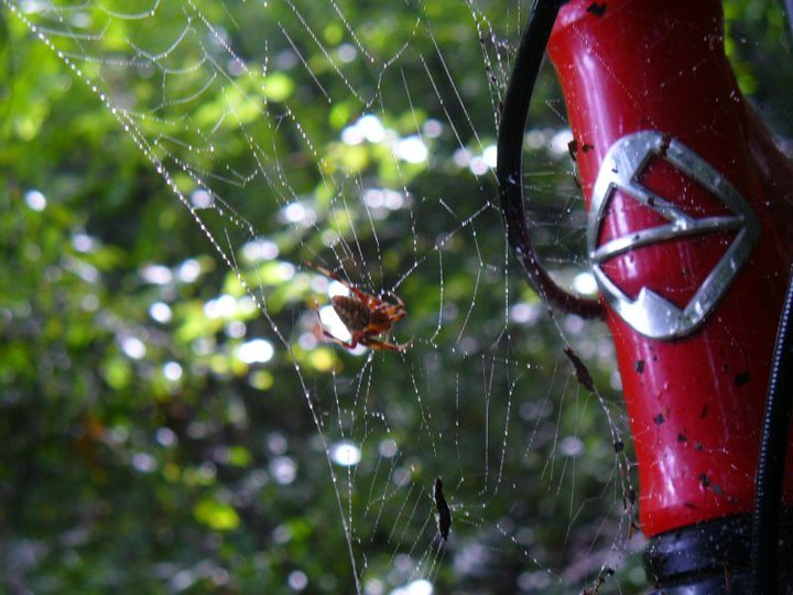 You know its serious singletrack when. . .-spider.jpg