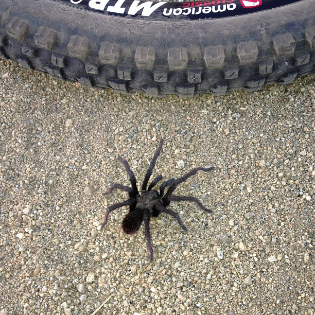 One picture, one line.  No whining. Something about YOUR last ride. [o]-spider.jpg