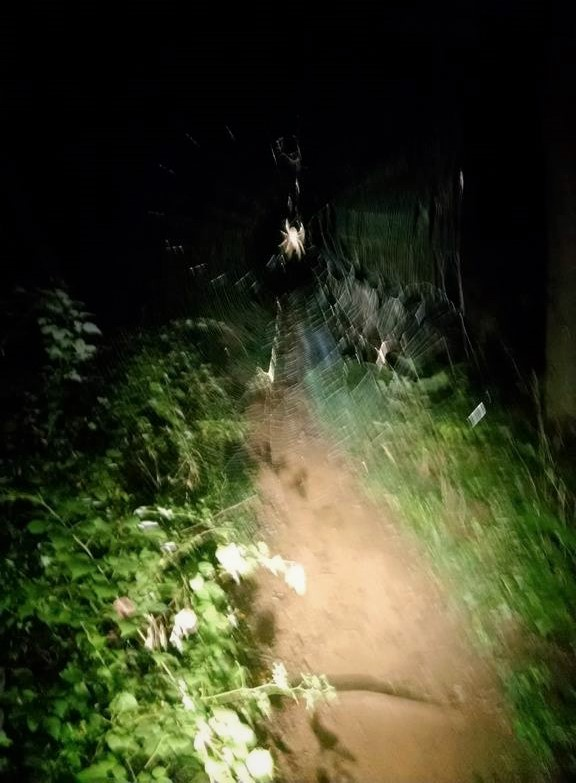 "The ""Unusual"" night bike ride-spider-rd.-block-2-.jpg"