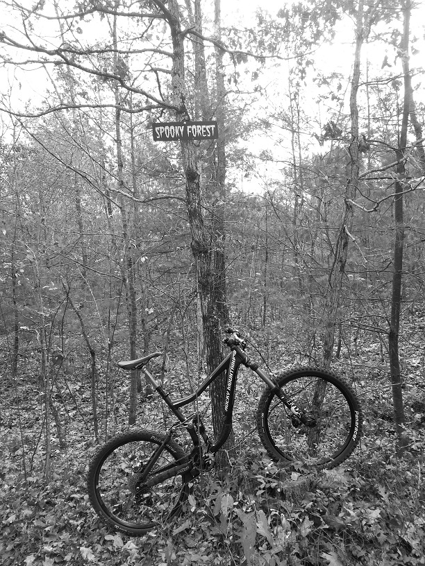Bike + trail marker pics-spooky-forest.jpg