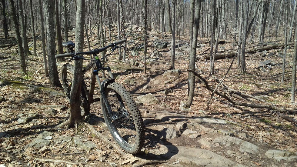 What is everyone riding?-springishere.jpg