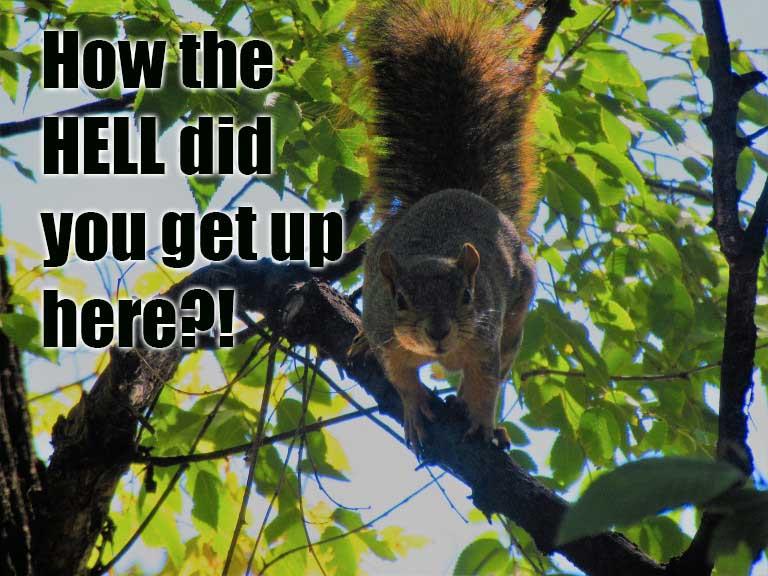 animal encounters-squirrel.jpg