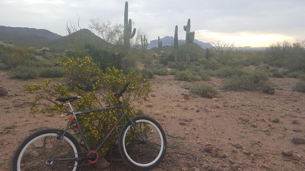 Show us a picture of your 26er MTB that you still use on the trails-ss.jpg