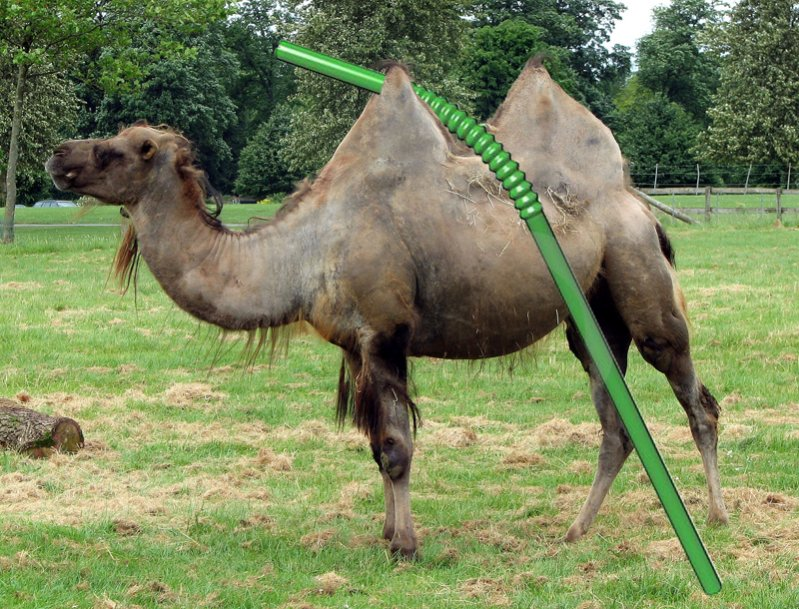 The Straw That Broke The Camels Back.-straw-camel.jpg