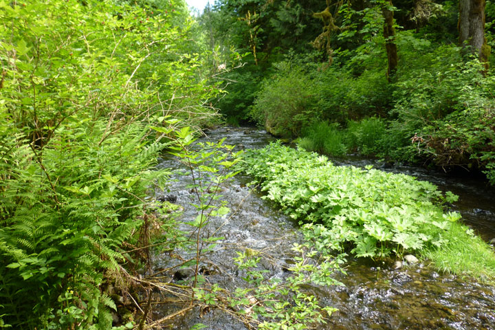 Finally Glenn rode Moss Lake-stream-1.jpg