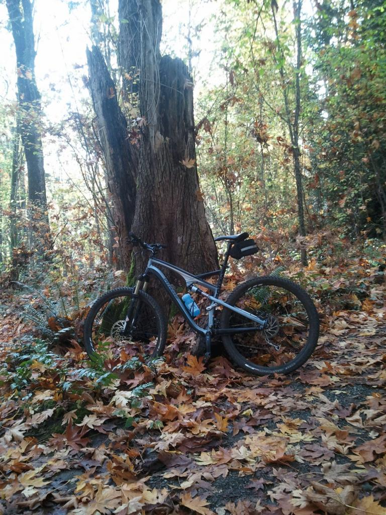 29ers In The Fall-stump.jpg