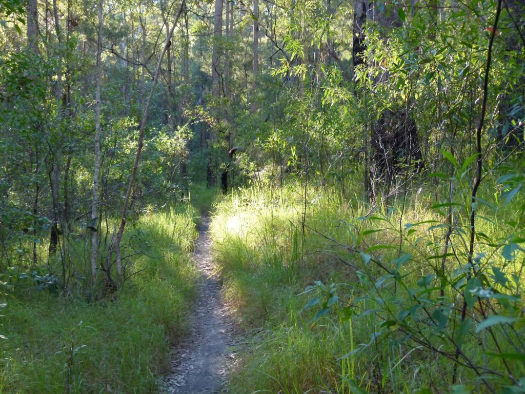 Modern trail corridor width?-sunny.jpg