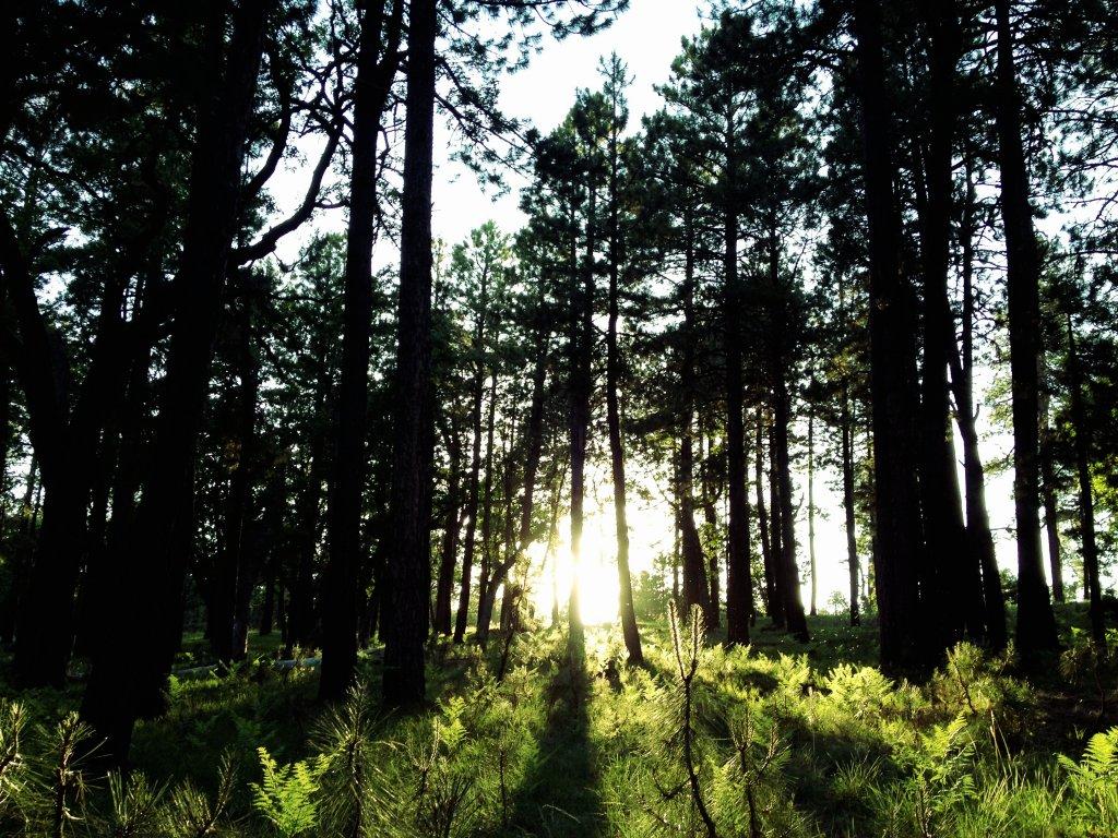 Aye Zee Pho Toe Fri Day - June 14th-sunset-pines.jpg