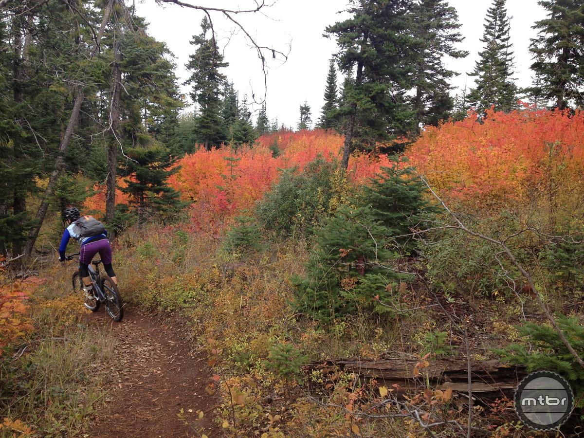 Oregon's Surveyor's Ridge Loop. Photo courtesy IMBA