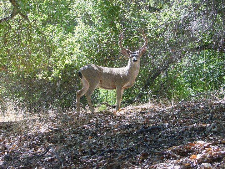 Wild Animals cant keep up.!-susans-buck.jpg