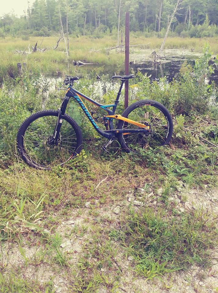Curious to see the custom builds of 29ers out there.-swamp-django.jpg