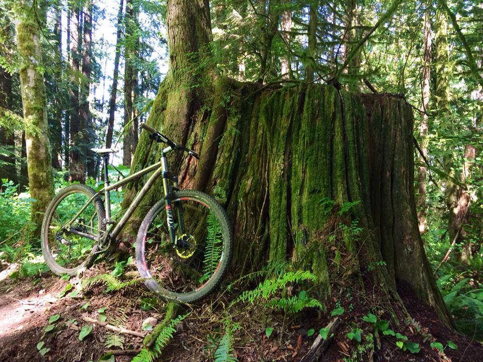 So I just rode the new Tiger Mt. trails.....-swamp.jpg