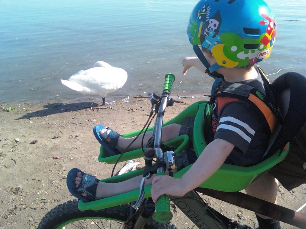 Beach/Sand riding picture thread.-swan.jpg