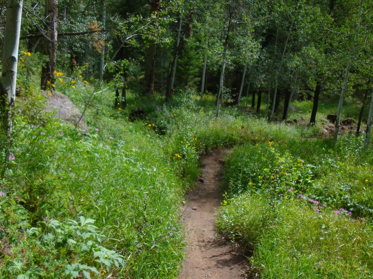 Name the shred game-tacky-singletrack.jpg