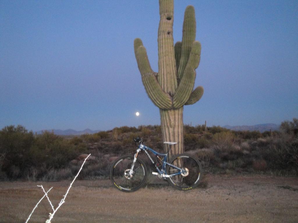 Todays P & D ride-tallboy-moon.jpg