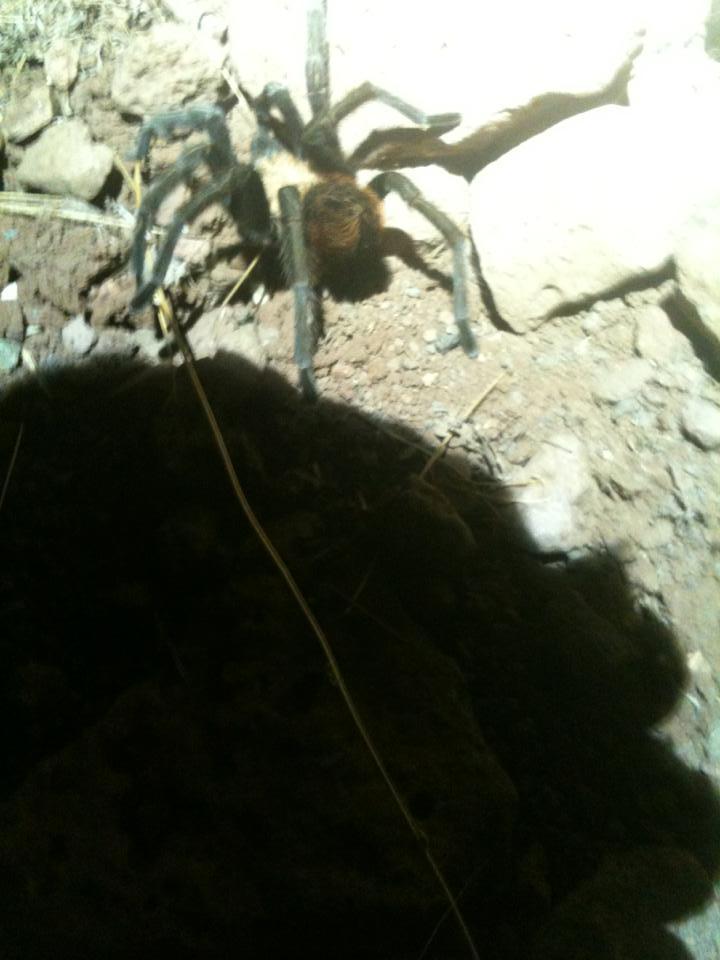 Photo Friday 9/6/13 Grand Junction Epic Ride Edition-tarantula.jpg