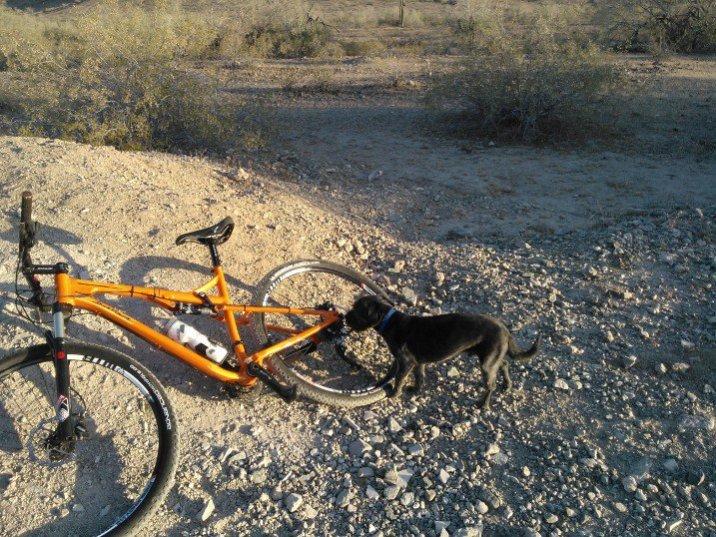 Training Trail Dog-td1.jpg