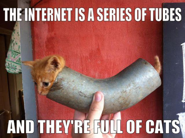 .......-internet-series-tubes-they-full-cats.jpg
