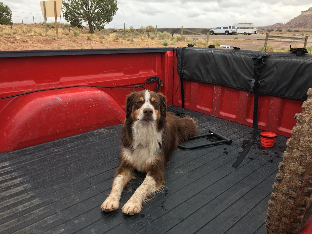 Trail Dogs...-rez-rez.jpg