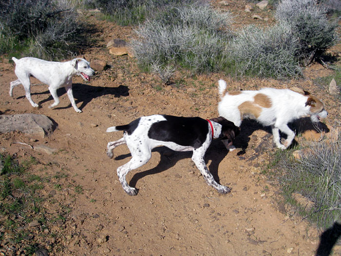 Dogs : Why?-three-dog-day.jpg