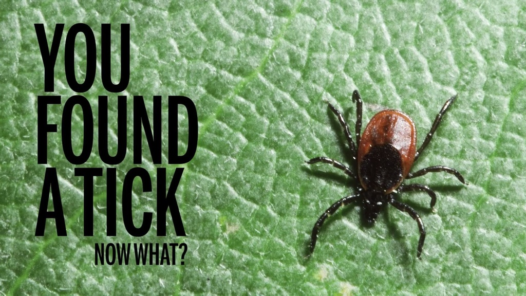 best way to prevent ticks?-tick.jpg