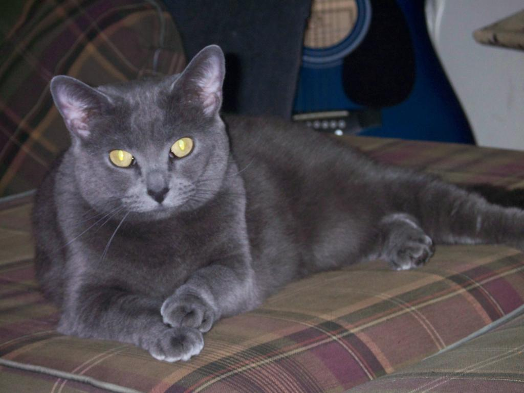 Cat Passion (here kittie, kittie, my new best friend...) Post your cat photos.-ticky-3.jpg