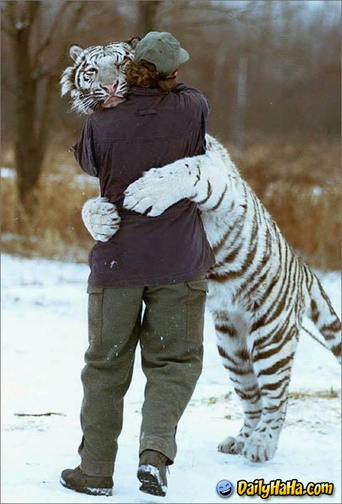 F the Chicago Cubs...-tiger_hugging_man_.jpg