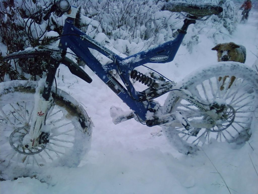 best 'regular' tire for the snow?-titus-snowbike.jpg
