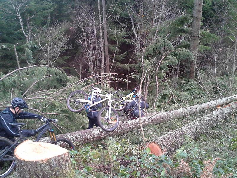 TKE logging begins...-tokul-e-logging-2013-800.jpg