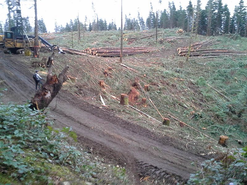 TKE logging begins...-tokul-e-logging-2013b-800.jpg