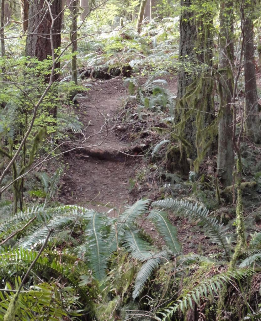 Tolt Trail Building-tolt-apr1sm.jpg