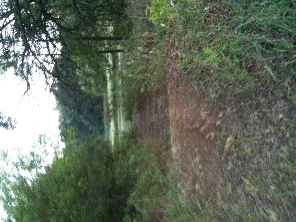 Flat land trails on my property-open to suggestions!-top-trail.jpg