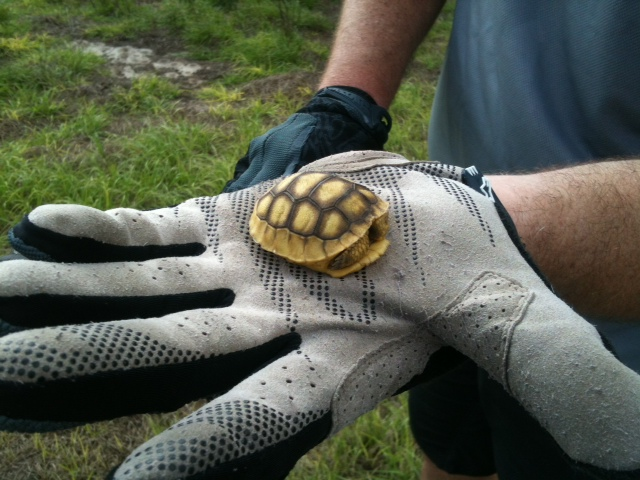 Wildlife you have seen on trail...post your pics...-tortoise-baby.jpg