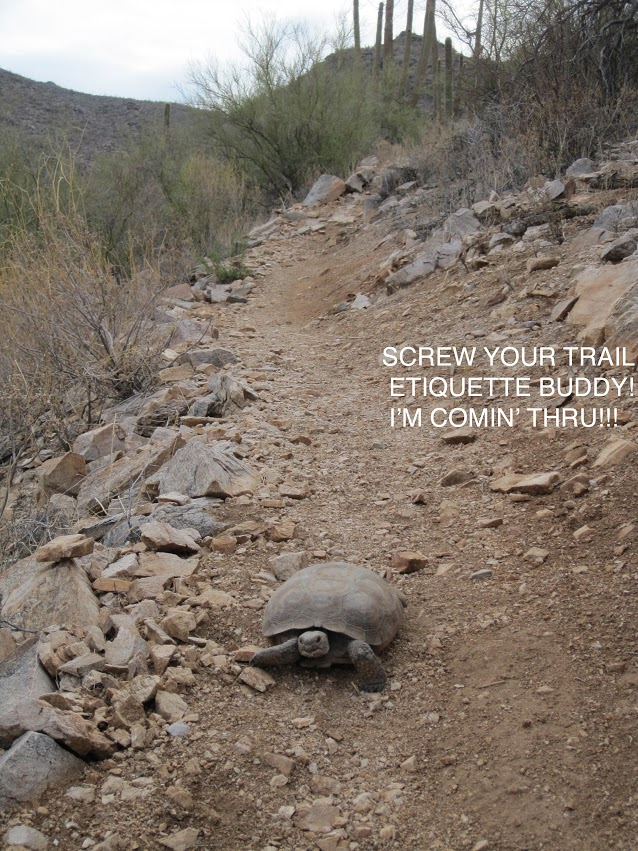 Pictures of things you find funny-tortoise.jpg
