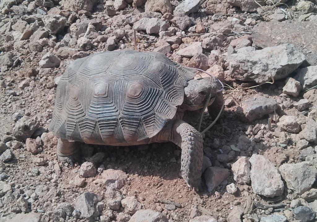 2016: Reptile Encounters-tortoise2-feb-29.jpg