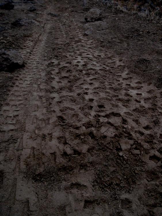 shiggy on the rocks!-tracks.jpg