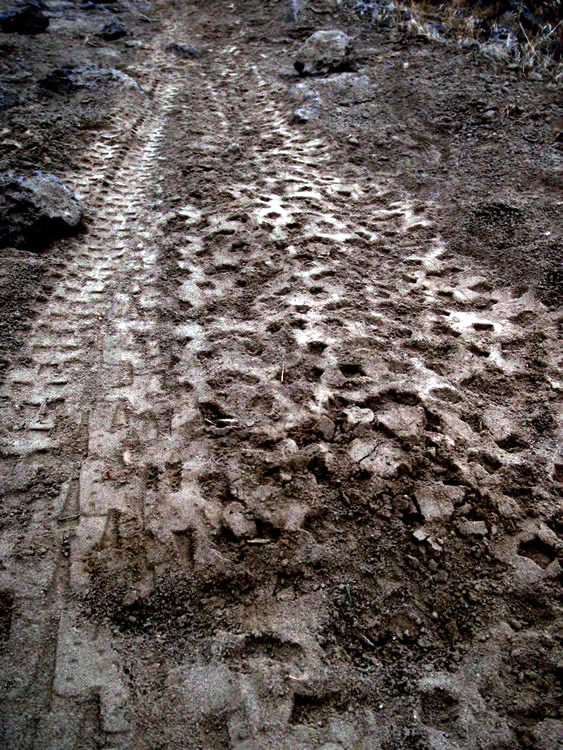 Leave no trace-tracks.jpg