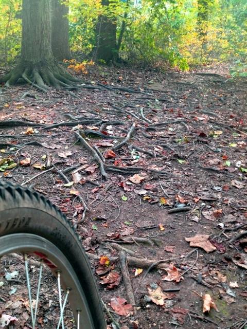 Trail Pics-trail-1.jpg