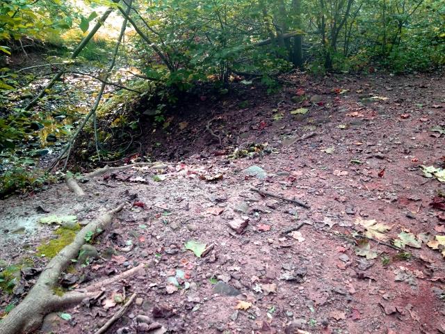 Trail Pics-trail-2.jpg