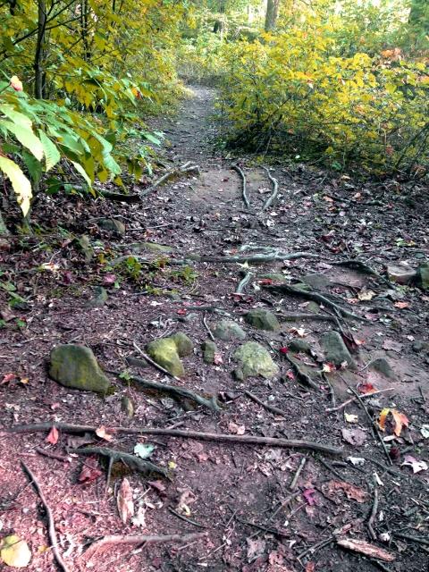 Trail Pics-trail-3.jpg
