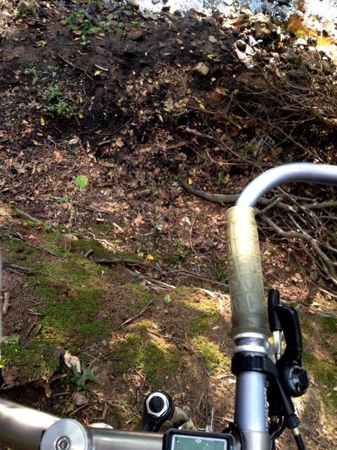 Trail Pics-trail-4.jpg