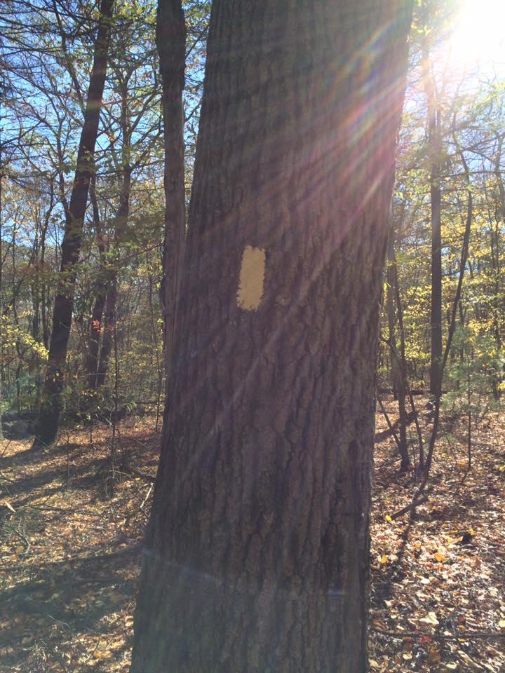 Signs for trails.-trail-blaze.jpg